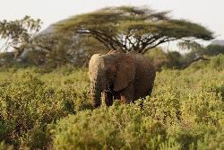 Sejur Kenya Coasta de Nord