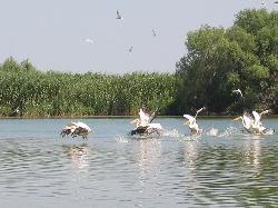 Revelion in croaziera prin Delta Dunarii
