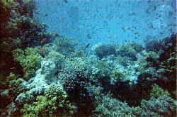 Craciun Hurghada
