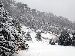 Ski Austria Inferioara