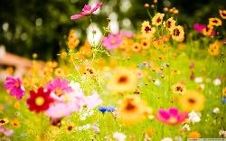 Festivalul Florilor MADEIRA
