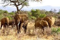 Sejururi Kenya