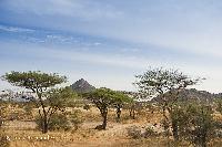 Revelion Kenya
